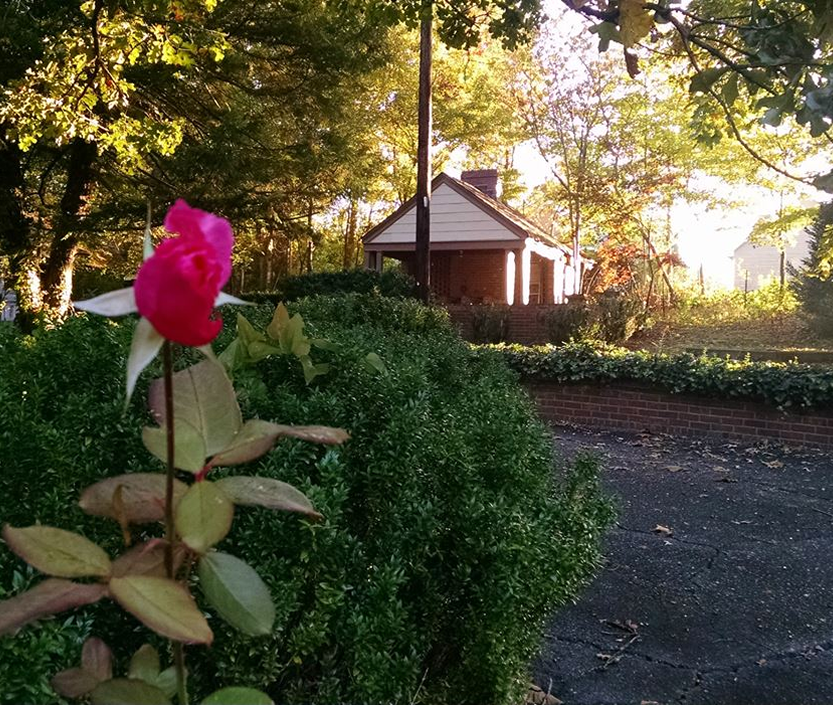 Terrace view with red rose in foreground